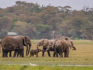 3 Days Discover the Beauty of Amboseli Safari in Kenya