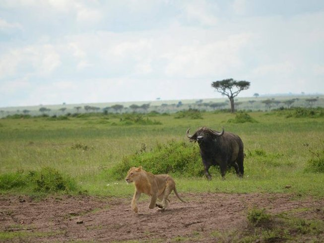 5 Days Guided Kenya Safari