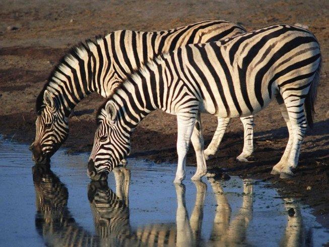 3 Days Kruger National Park Safari in South Africa