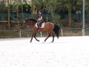 3 Days Beginner to Intermediate Horse Riding Holiday in Cascais, Portugal