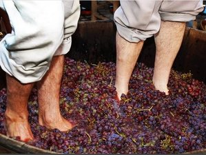 8 Days Cultural Portuguese Wine Tours