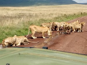 6 Days Camping Group Safari Tour in Northern Tanzania