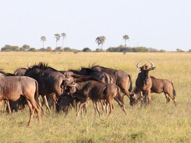6 Days Horseback Riding Safari Botswana