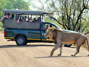 4 Days Classic Safari in Balule Nature Reserve and Kruger National Park, South Africa