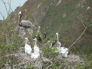 4 Day Monkey, Turtle, and Bird Watching Wildlife Tour in Ecuador