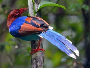 14 Days Birdwatching Safari Sri Lanka