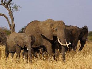 3 Days Safari in Tarangire National Park and Ngorongoro Crater, Tanzania