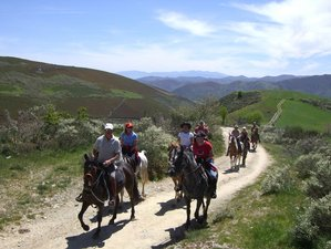 6 Day Cultural Tour and French Way Horse Riding Holiday in Lugo, Galicia