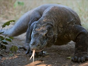 5 Day Komodo Jurassic Live Aboard Tour in East Nusa Tenggara, Indonesia