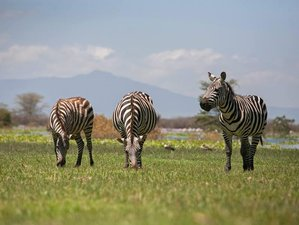 7 Days Classic Safari in Kenya