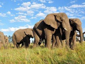 8 Days Masai Mara, Lake Manyara, and Ngorongro Crater Safari in Kenya and Tanzania