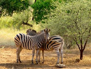 3 Days Outstanding Budget Safari South Africa