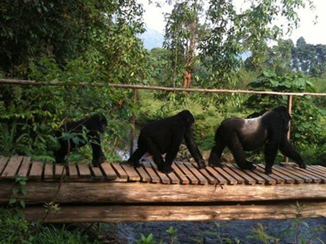 4 Days Budget Gorilla Safari in Uganda