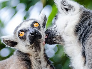 13 Days Safari in the 6 Best Wildlife Sanctuaries of Madagascar