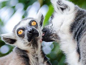 13-Daagse Safari in de 6 Beste Wildlife Sanctuaries van Madagaskar