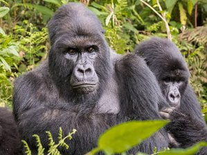 12 Days Gorilla Trekking and Wildlife Safari in Uganda