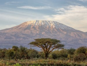 7 Days: Hiking Mount. Kilimanjaro and Mkomanzi Park Safari