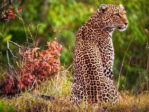 8 Days Luxury Wildlife Safari in the Northern Circuit, Tanzania