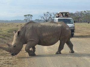 6 Days Maasai Mara, Lake Nakuru, and Amboseli Budget Group Safari in Kenya