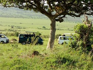 3 Days Amazing Safari Masai Mara National Reserve, Kenya