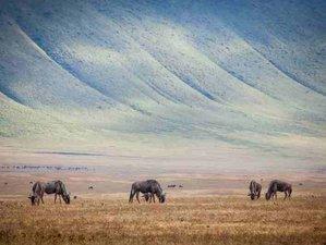6 Days Wildlife Tour Safari in Tanzania