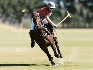 15 Days Spanish Lesson and Polo Horse Riding Holiday in Buenos Aires, Argentina