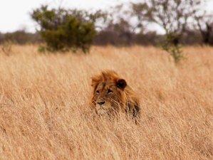 4 Days Kruger Park and Panoramic Tour Safari in South Africa