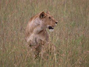 8 Days Luxury Safari in Kenya