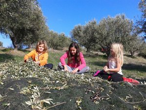 8 Days Eleo Olive Harvest Retreat in Crete