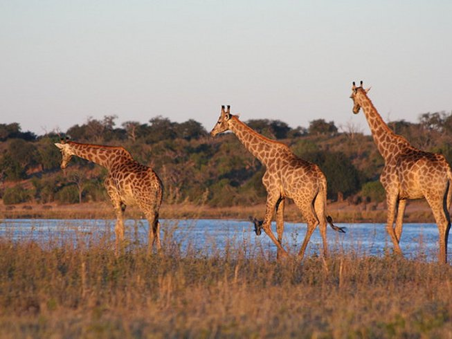 5 Days Victoria Falls and Chobe National Park Safari