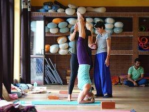 4 Day 50-Hour Depth of Relaxation Yin Yoga Teacher Training in Rishikesh
