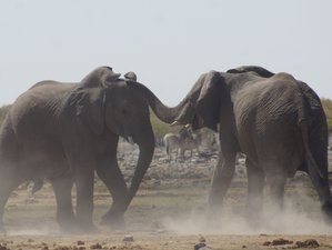 13 Days Guided Safari in Namibia