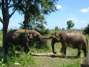 2 Day Treehouse Wildlife Experience in Yala National Park, Uva Province