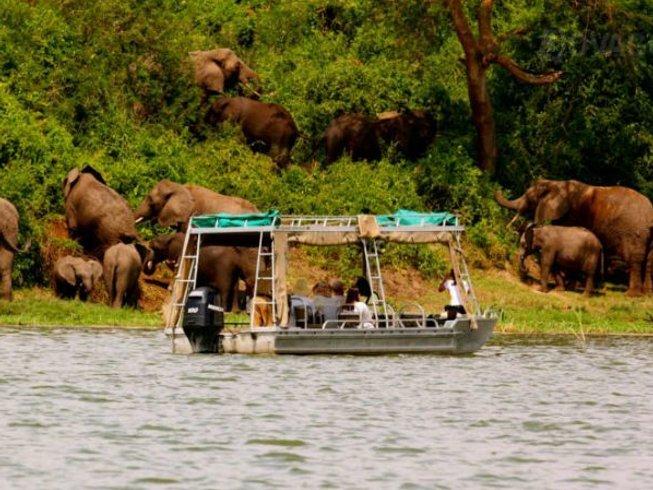 8 Days Enchanting Chimpanzee and Gorilla Safari in Uganda