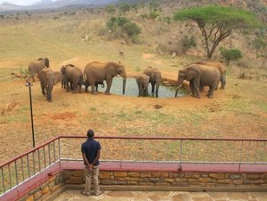 3 Days Special Tsavo East and Tsavo West with Mzima Springs Safari in Kenya