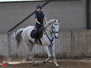5 Day Kids' and Teens' Horse Riding Camp (8 to 16 years) in Hannut, Liège
