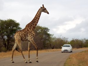 3-Daagse Adembenemende Safari in Kruger National Park, Zuid-Afrika