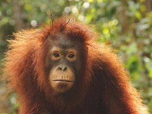 5 Day Orangutan Wildlife Tour in Tanjung Puting National Park