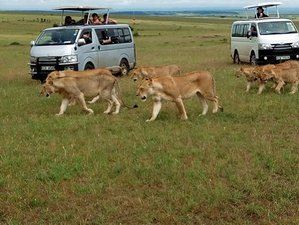 4 Days Great Migration Safari with Camping in Masai Mara, Kenya