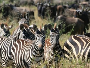 2 Days Awe-Inspiring Tsavo East and Taita Hills Safari in Kenya