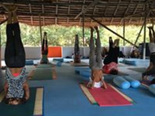 13 Days Ashtanga Vinyasa Intensive Yoga Course in Kerala