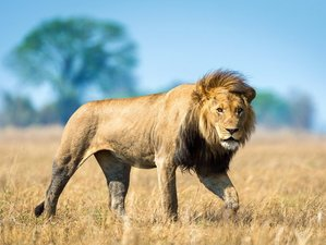 8 Days Camping Safari to Liuwa Plains and Kafue National Park in Zambia