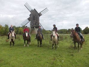 8 Day Enthralling Horse Riding Holiday in Muhu