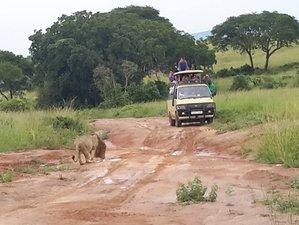 7 Days Ziwa Rhino, Murchison, and Queen Safaris Uganda
