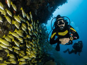 Surf and diving holidays