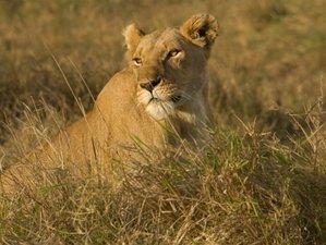 12 Days Exciting Safari Adventure in Kenya and Tanzania