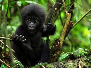 5 Days Gorilla and Tree Climbing Safari in Uganda