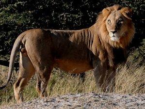 11 Days Safari to Chobe, Moremi, Savuti, and Okavango in Botswana