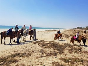 8 Day Luxury Horse Riding Holiday in Salalah, Dhofar