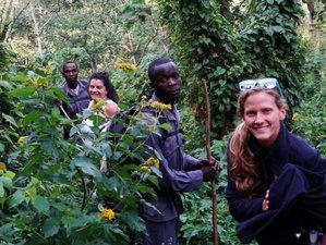 5-Daagse Betaalbare Berggorilla Safari met Chimpansees Spotten in Oeganda